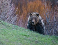 Yellowstone : Un printemps tardif