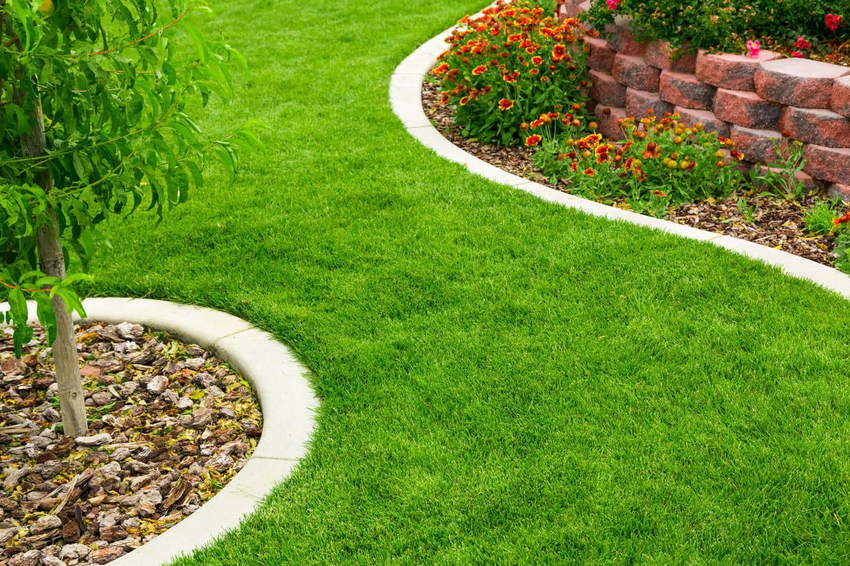 Comment prendre soin de sa pelouse for Entretien pelouse mousse