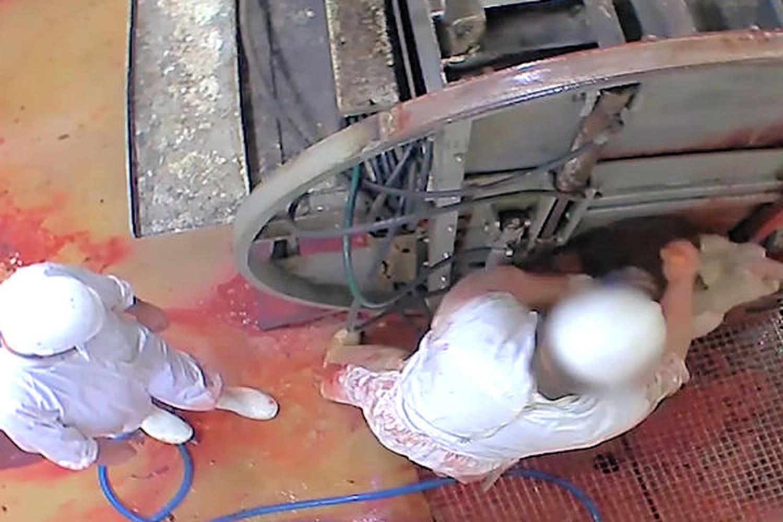Abattoir d'Alès: lavidéo choc qui aentrainé lafermeture