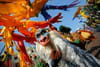 Disneyland Paris: le parc s'élargit à l'univers des super-héros