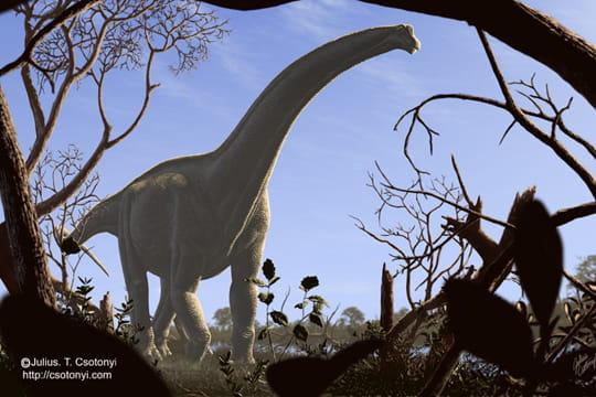 Titanosaures