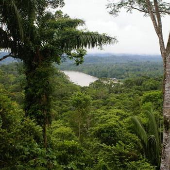en equateur, le rio napo, un affluent de l'amazone