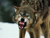 Redoutables prédateurs : Les 7 péchés capitaux