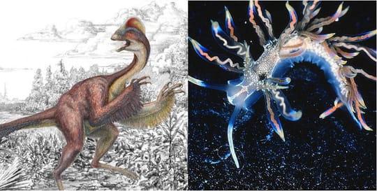 Les 10 espèces les plus surprenantes découvertes en 2015