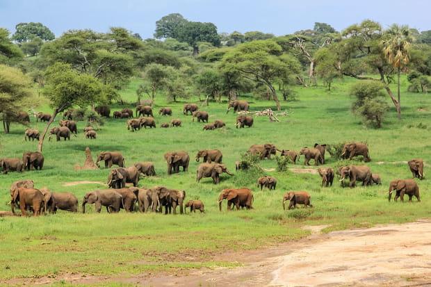 Le parc national de Tarangire en Tanzanie