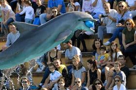 Les spectacles de dauphins et d'orques en voie d'extinction