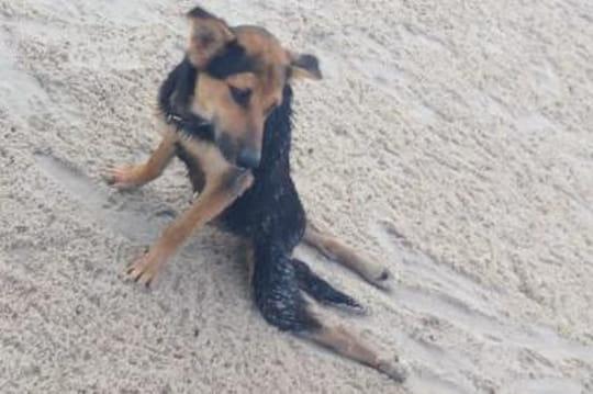 Une touriste canadienne sauve Léo, un adorable chien