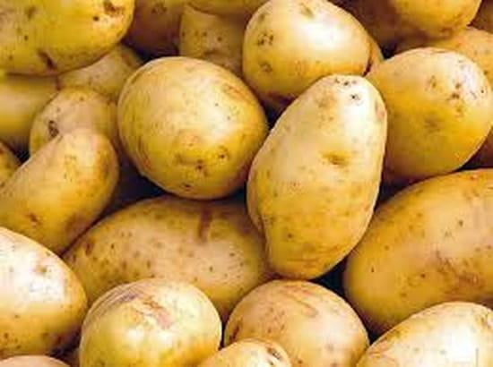 Patati Patata cocodrilos  - notre spécialité :  La pomme de terre -