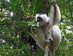Madagascar, les trésors verts de l'île rouge