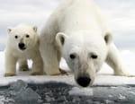 Caméra cachée : ours espionnés