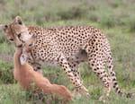 Tanzanie, la nature à l'état sauvage
