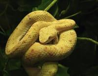 Bêtes de serpents