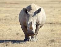 Les superpouvoirs du règne animal : Les suréquipés