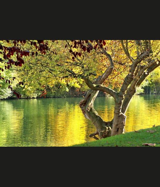 Bords de Marne en automne