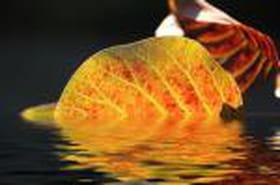 L'automne se profile, admirez ses couleurs