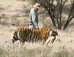 Ma vie avec les tigres