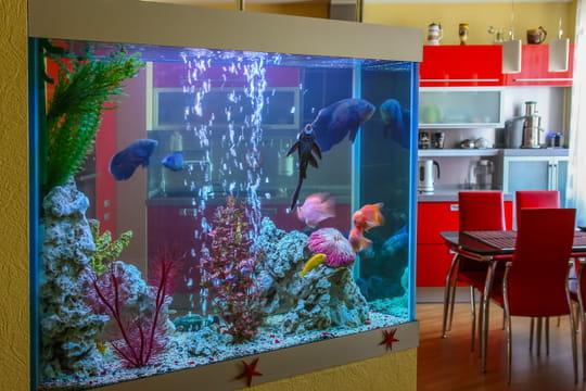 Meuble aquarium: comment bien le choisir