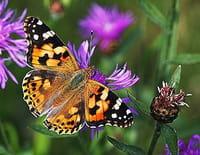 Curiosités animales : Des apparitions magiques : l'hirondelle et le papillon