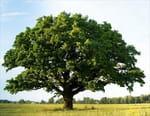 Le temps des arbres