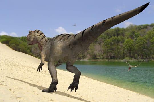 L'allosaurus