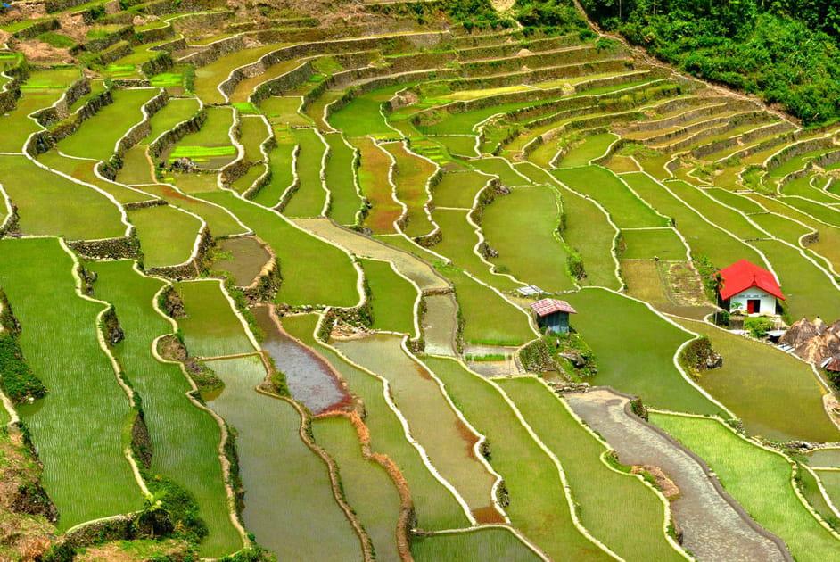 Les vertes rizières des Philippines