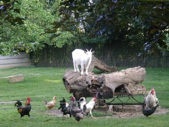 Auberge du Blaisel  - Les animaux -