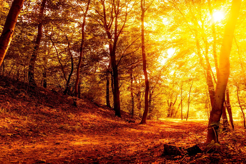 Equinoxe d'automne: pourquoi les feuilles tombent-elles?