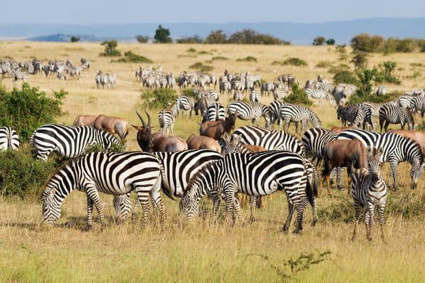 La réserve nationale du Masai Mara au Kenya