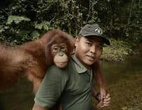 A l'école de la vie sauvage : Les orangs-outans