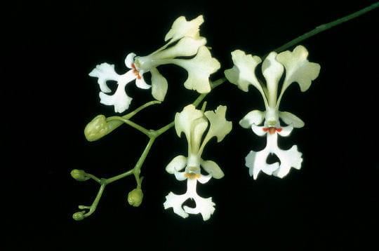 Les orchidées, ambassadrices de la biodiversité