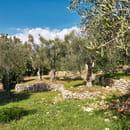 Le Mas du Calme  - Parc arboré et planté d'oliviers centenaires -   © Auteuil