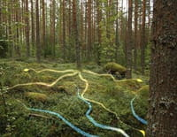 Les secrets de la forêt boréale
