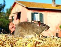 Chroniques sauvages : Une journée à la ferme