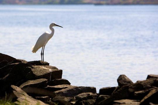 Halte sur le lac Nasser