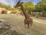 Zoo : le défi de demain