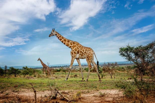 Le parc national Murchison Falls en Ouganda