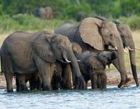 Humanima : Mémoires d'éléphants
