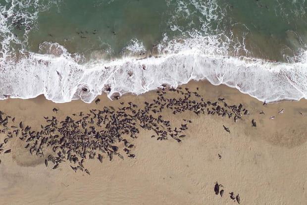 Les phoques de Namibie