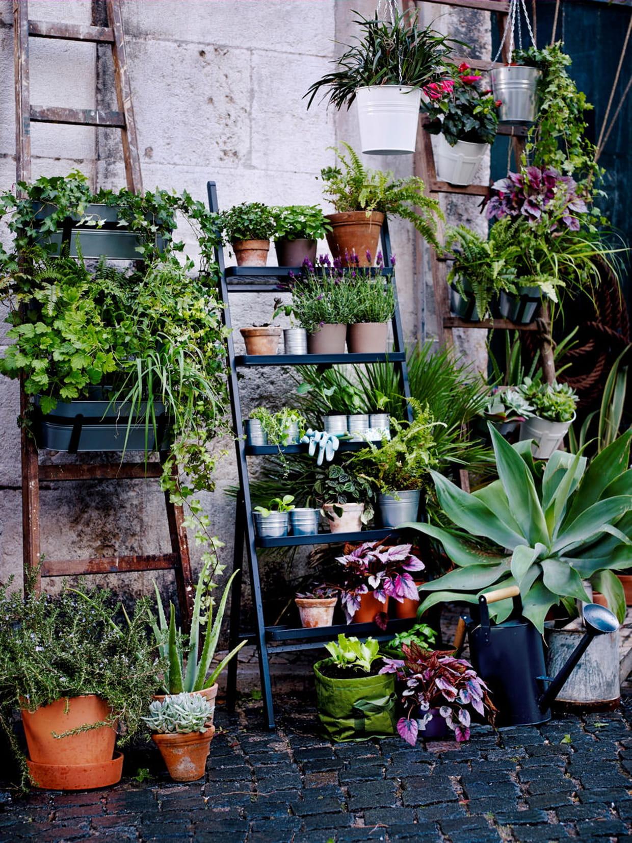 des plantes vertes pour mon balcon. Black Bedroom Furniture Sets. Home Design Ideas