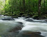 Aux sources de l'Essequibo : La source mystérieuse