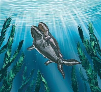 scène d'accouplement chez ichthyostega. le mâle maintient la femelle pendant
