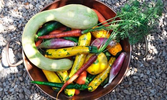 Restaurant l'Estaminet  - légumes et fruits de saison -