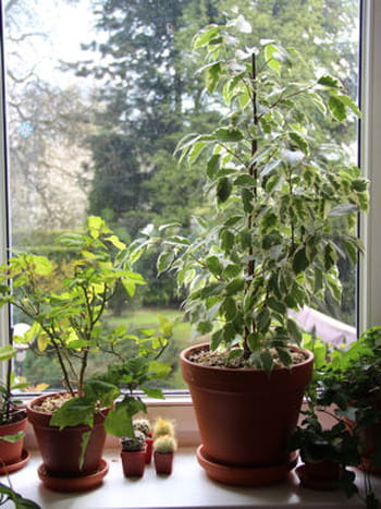Pour offrir de la lumi re ses plantes for Offrir un miroir signification