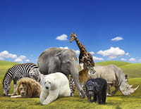 Les animaux du zoo : Drôles de dames et paradis pampa