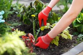 Nos conseils pour ne plus avoir de mauvaises herbes dans le jardin