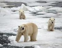 Suprême Animal : L'ours polaire, le chien et la squille
