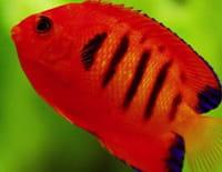 Les rois des aquariums : Le défi de Ben