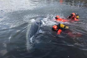 Marseille: une baleine dans le Vieux-Port, sauvée par les pompiers