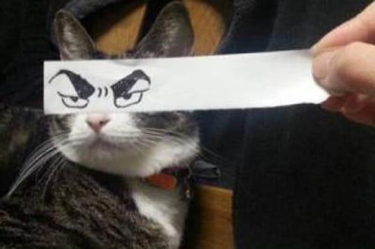 """""""Cat montage"""": le nouveau buzz venu du Japon"""
