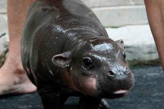 10bébés animaux que vous n'avez jamais vus